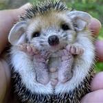手のひらに収まるカワイイ動物の赤ちゃんの写真集 30選