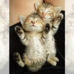 いたずらをしても起きる気配の無い熟睡中の二匹の子猫がかわい過ぎ!