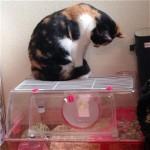 毎日ハムスターをじっと見つめていた結果、予想外の行動をとった猫(笑)