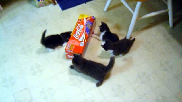 一つの箱をめぐってバトルを繰り広げる四匹の子ネコ