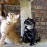 オモチャで遊ぶ子ネコを真後ろで見ていたもう一匹の子ネコに訪れた突然の出来事!