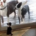 両親と一緒に外で遊びたくてガラスドア越しに必死にアピールする子犬
