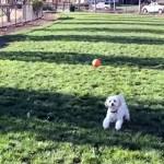 華麗にジャンプするも、ボールのキャッチを見事に失敗するワンちゃん(笑)