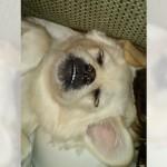 眠っているワンちゃんの口元にオヤツを置いてみたところ、意外な反応が・・・