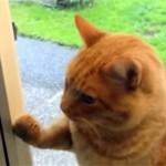 外から帰ってきたことを飼い主に知らせるネコ。その方法に驚き!