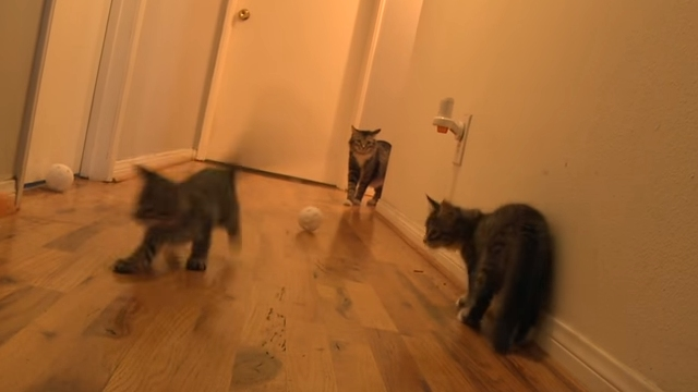 飼い主さんの突然のくしゃみに驚いた猫の反応がスゴイことに!