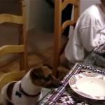 家族と一緒に食事前のお祈りをするお利口なワンちゃん