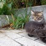 睡魔に襲われ必死に耐えている子ネコ