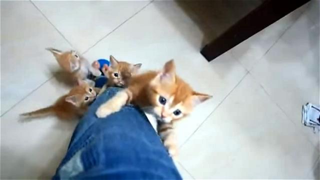 これはカワイイ!|我も我もと飼い主さんの足をよじ登ってくる子ネコ♡
