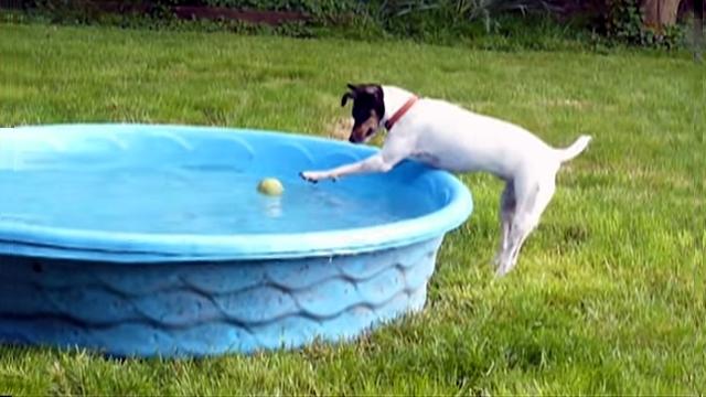 ボールを取ろうと一生懸命だった犬に訪れたまさかの虚しい結末(笑)