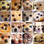 犬や猫と並べたら一瞬脳が混乱してしまいそうな写真集 6枚