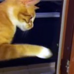 これは堪らん(笑)!|カメムシに悪臭を放たれて吐き気を催すネコ