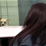 出産後間もなく子犬と引き離され飼い主に捨てられた母犬。動物愛護協会で子犬と再会!