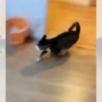 飼い主を追い抜きスゴイ勢いで部屋に駆け込んできたネコ。その目的は…!?