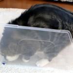 箱好きの太っちょネコちゃんがスリムなプラケースに挑戦した結果(笑)