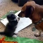 弱々しい猫パンチを繰り出すカワイイ子猫に思わず胸キュン!