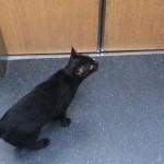 ひとりでエレベーターに乗り込んできた黒猫。その目的に思わずホッコリ♡