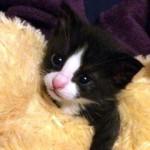 裏庭で見つけた迷子の子猫を保護。犬の母親に育てられることに… 11枚