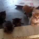 お出かけをしたお母さんを一生懸命に追いかける子猫たちの姿に胸キュン♡