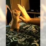 ぎこちない猫パンチを繰り出す子猫。バランスを崩してかわいい結果に(笑)