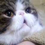 「笑点」のテーマソングを上手に歌う猫のドラミちゃん♪