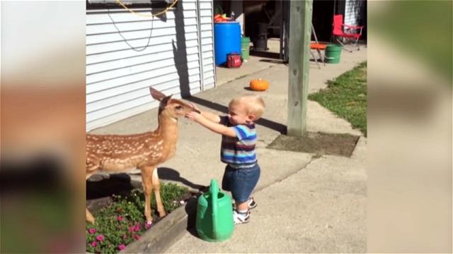 花壇の水遣りをしようとする男の子と小鹿の微笑ましい光景♪