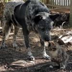神経障害を持つ子猫を保護して愛犬に引き合わせたところ…