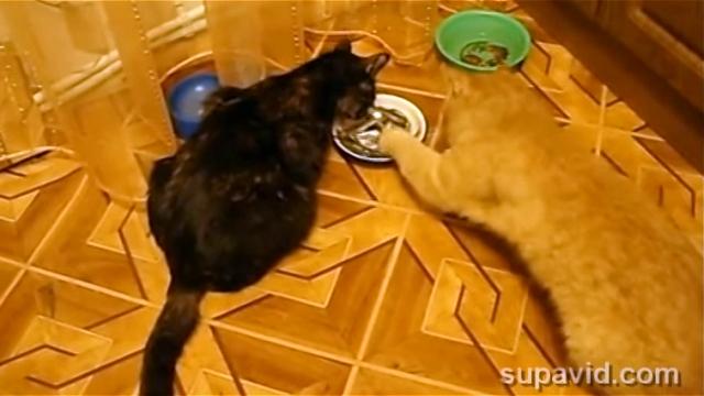 ご飯を横取りしていた猫。面倒くさくなってとんでもない行動に・・・