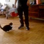 ペットキャリーに入るのを嫌がる猫が多いけど、うちの猫は違ってた!