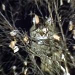 これは笑える!|ロシア軍人さんの大胆かつ大雑把な猫の救出方法