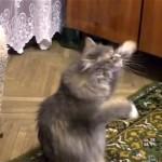 見えない壁をカリカリし続ける不思議な猫♪