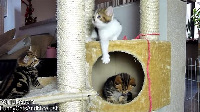 無邪気でちょっぴりドジな子猫が堪らなくかわいい映像集