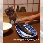焼き魚を盗もうとする猫と飼い主さんのコントのような攻防戦(笑)