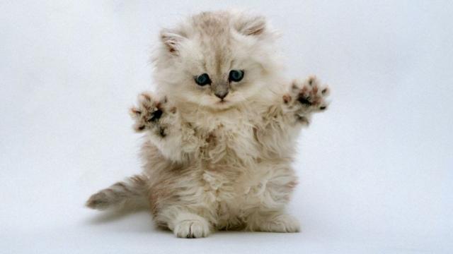 的を射すぎ!(笑)|猫を迎え入れるときに知っておきたい「猫の十戒」