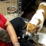 孤児の3匹の子猫を施設で保護したところ、母親役を買って出た子犬を出産したばかりの母犬