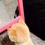 鏡の前で呆然と立ちすくむネコ。こんな筈じゃなかったのに・・・