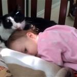 大好きな赤ちゃんをペロペロと毛繕いするネコ