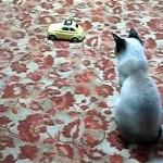 オモチャに気をとられて隙だらけのネコを触ってみた結果…(笑)