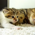 甘えにやって来た子猫をやさしく抱きしめる母猫の微笑ましい光景にホッコリ♡