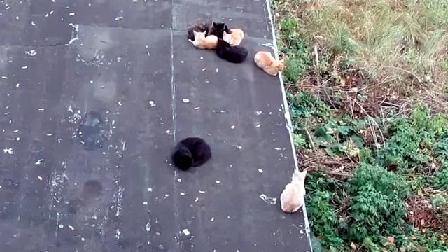 寒さに震える猫。暖をとる方法が大胆すぎ!(笑)