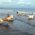 水切りをするように波に向かってダッシュするワンちゃん