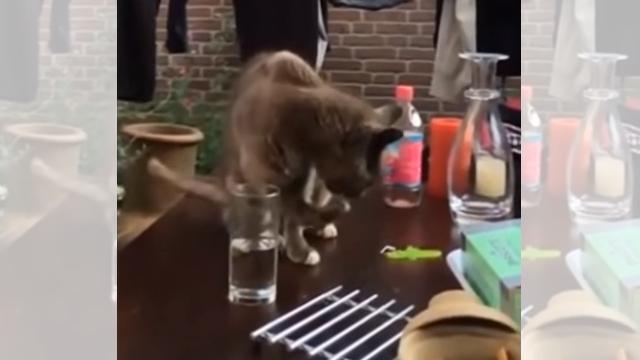 グラスの水を手につけて飲む猫。グラスをこっそり退かしてみた結果(笑)