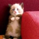 これはカワイイ!|掃除機を怖がる子ネコ。壁際に追い詰められて万事休す!