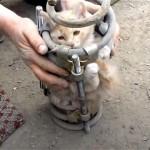 トラックの部品に挟まれた子ネコの3時間にも及ぶ救出劇