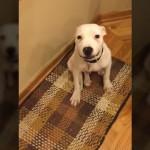 お座りをしている犬に向かって「はいチーズ」反応は?