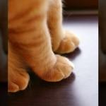 思わず触れてみたくなる「モフモフでカワイイ猫の前脚」写真集 20枚