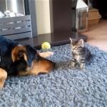 子猫に気づかれないようにイタズラを仕掛ける子猫が大好きなワンちゃん(笑)