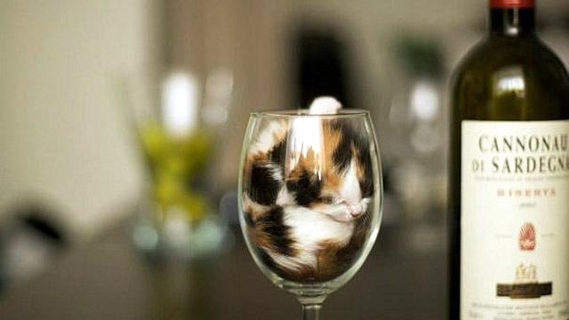 「ネコは液体である」という例えを裏付ける写真集 22枚