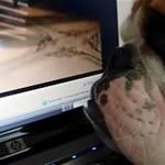 画面に映る犬を見て、ディスプレイの裏を覗き込むブルドッグ犬(笑)