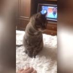 これはショック!|ネコを撫でようとしたら意外な反応を返された飼い主